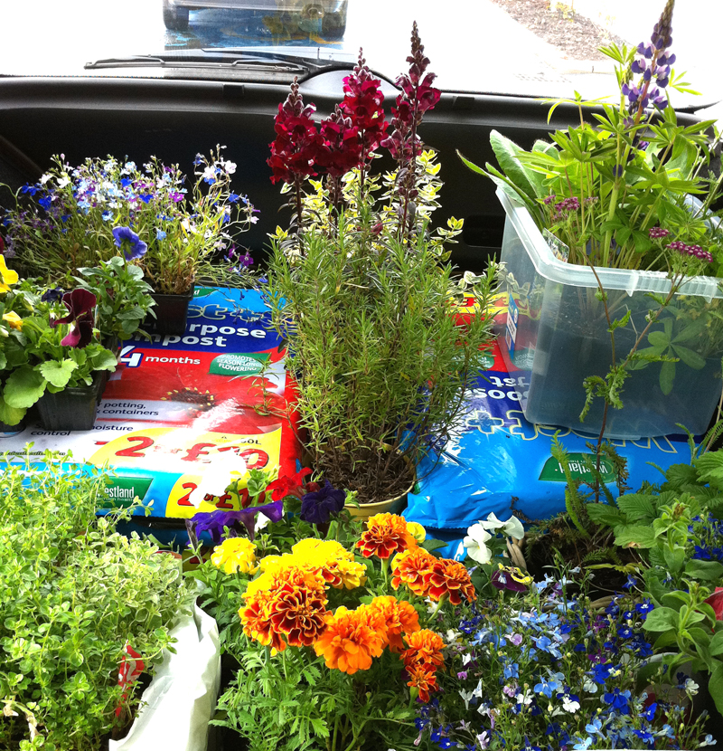 First of many loads from the garden centre