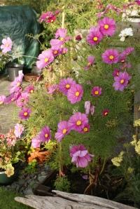Late blooming flowers