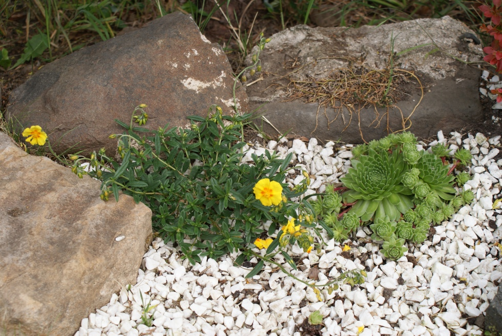 New recruits to the rockery